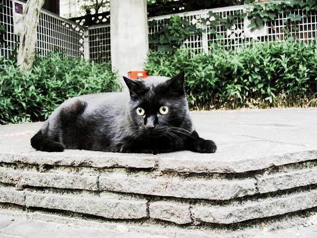 猫撮り散歩2212