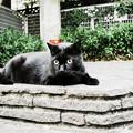 Photos: 猫撮り散歩2212