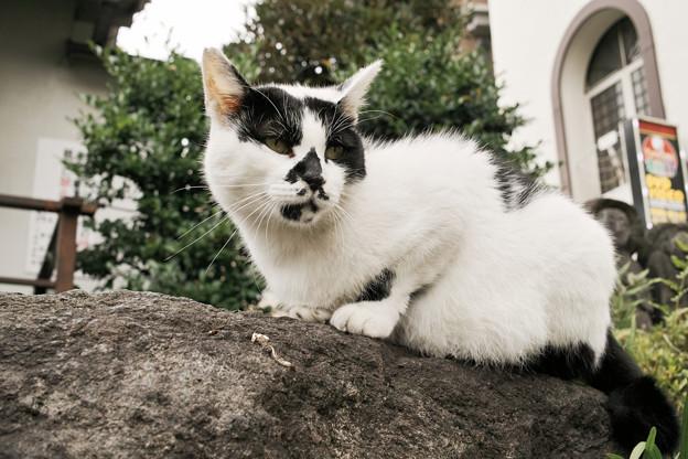 猫撮り散歩2213