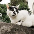 写真: 猫撮り散歩2213