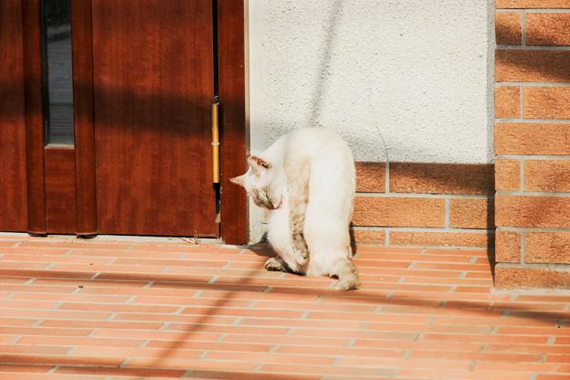 猫撮り散歩2214