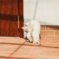 写真: 猫撮り散歩2214