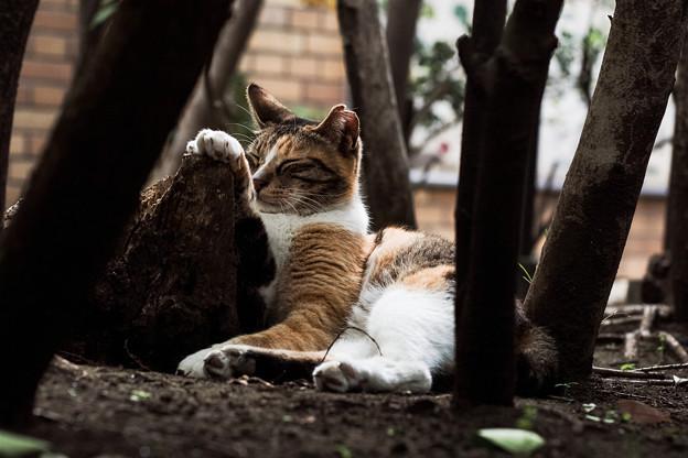 写真: 猫撮り散歩2217