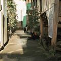 写真: 猫撮り散歩2222