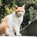 写真: 猫撮り散歩2223