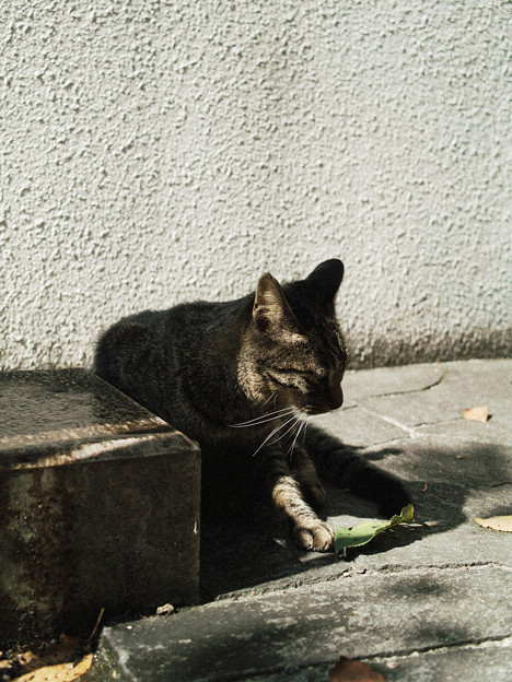 写真: 猫撮り散歩2225