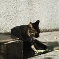 Photos: 猫撮り散歩2225