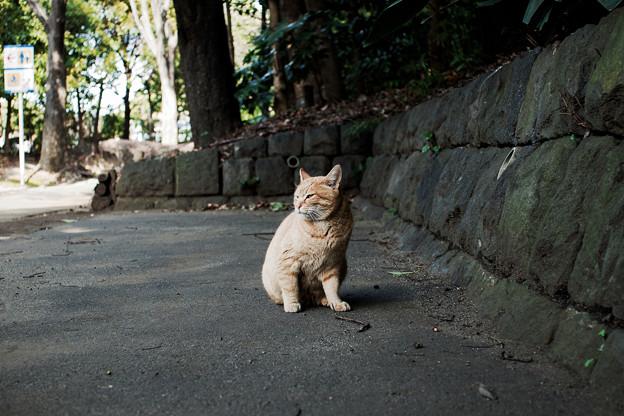 猫撮り散歩2226
