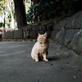 写真: 猫撮り散歩2226