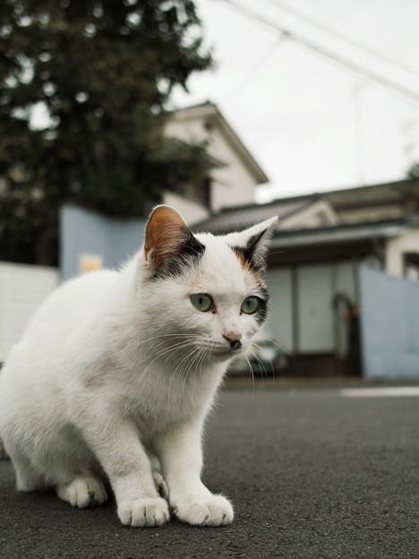 猫撮り散歩2229