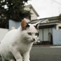 写真: 猫撮り散歩2229