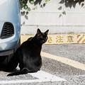 写真: 猫撮り散歩2231