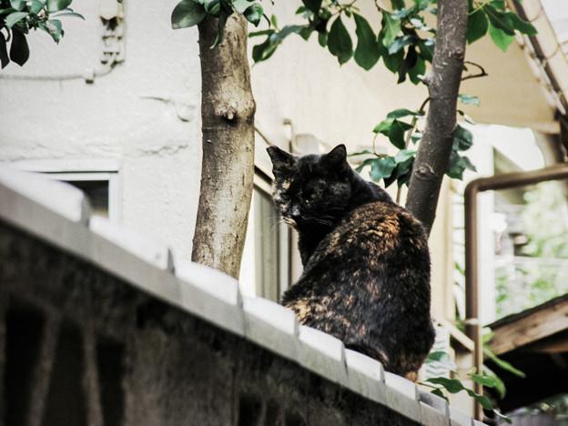 猫撮り散歩2237
