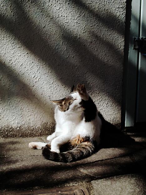 猫撮り散歩2238