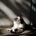 写真: 猫撮り散歩2238
