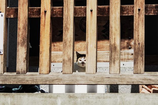 猫撮り散歩2241
