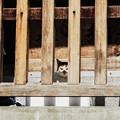 写真: 猫撮り散歩2241