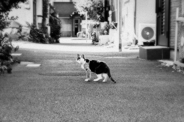 写真: 猫撮り散歩2249