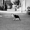 Photos: 猫撮り散歩2249