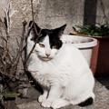 写真: 猫撮り散歩2250