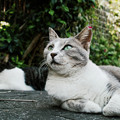 写真: 猫撮り散歩2251