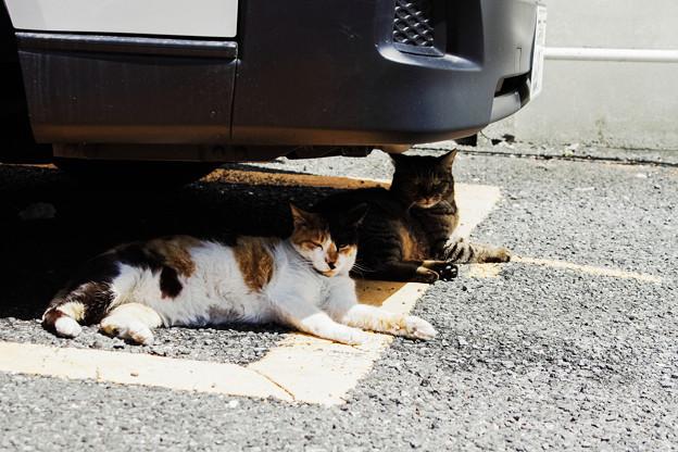 猫撮り散歩2253