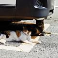 写真: 猫撮り散歩2253