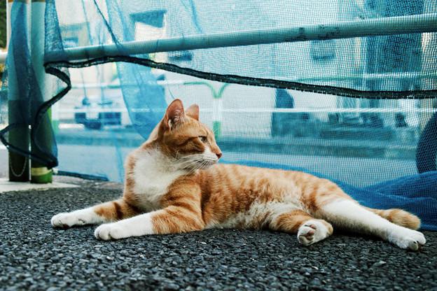 猫撮り散歩2254