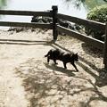 猫撮り散歩2260