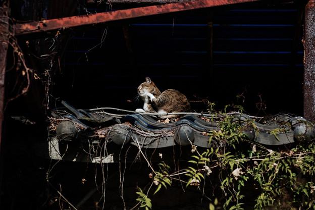 猫撮り散歩2262