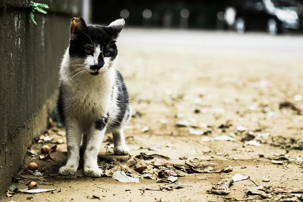 猫撮り散歩2264