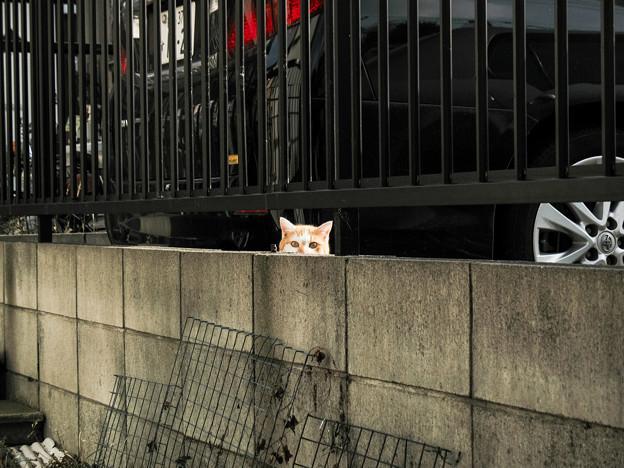 猫撮り散歩2267