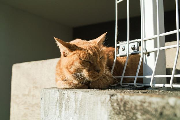 Photos: 猫撮り散歩2272
