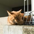猫撮り散歩2272