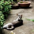 猫撮り散歩2273