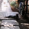 猫撮り散歩2276