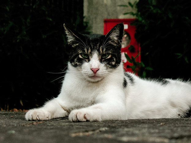 猫撮り散歩2277