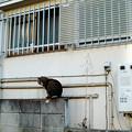 猫撮り散歩2278