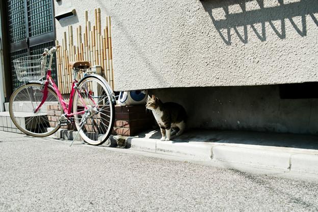 猫撮り散歩2281