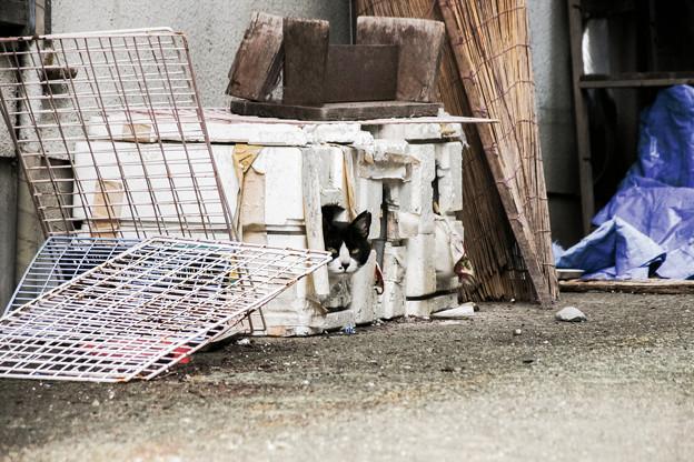 猫撮り散歩2282