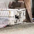写真: 猫撮り散歩2282