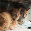 写真: 猫撮り散歩2284