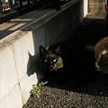 写真: 猫撮り散歩2285
