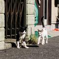 写真: 猫撮り散歩2286