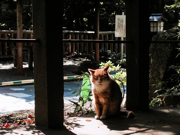 猫撮り散歩2288