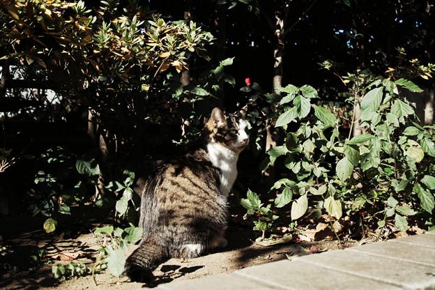猫撮り散歩2290