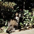 Photos: 猫撮り散歩2290