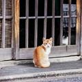 Photos: 猫撮り散歩2292