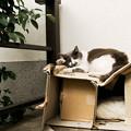 猫撮り散歩2294