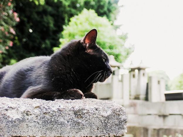猫撮り散歩2299